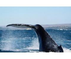 Cape Town Whale Watching Festival