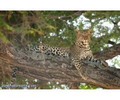 Asante Tanzania African Safaris