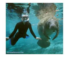 Swim With The Manatees Orlando Disney Area