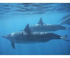 Swim Free Hawaii
