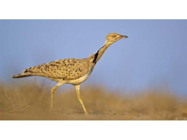 Birding Tours in India