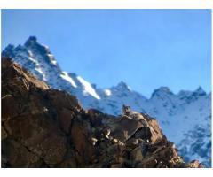 Snow Leopard Tours Ladakh