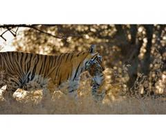 Ranthambhore Tiger Safari