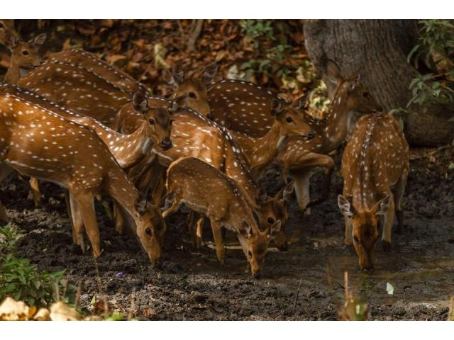 Kanha National Park Holiday Packages