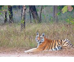 Just Tigers - Bandhavgarh, Kanha and Pench Tour (12 Nights, 13 Days)
