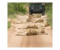 Cape Town to Kruger - Picturesque and Authentic Safari exploring the best of South Africa.