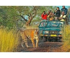 The Grand Golden Triangle & Ranthambore