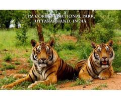 Book Jim Corbett Wildlife Sanctuary in Northern India